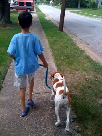 Chase used to pull on the leash.