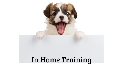 In Home Training